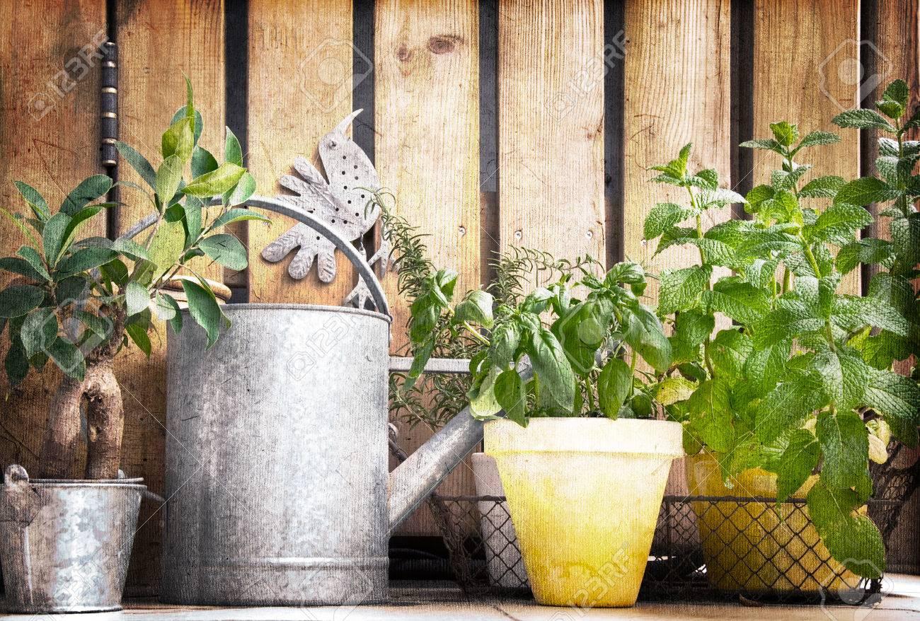 Gießkanne Und Aromatischen Kräutern Garten Vintage Lizenzfreie
