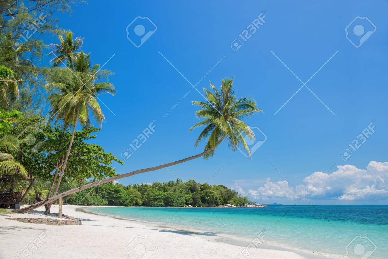 Tropical Beach Landscape With A Leaning Palm Tree Stock Photo