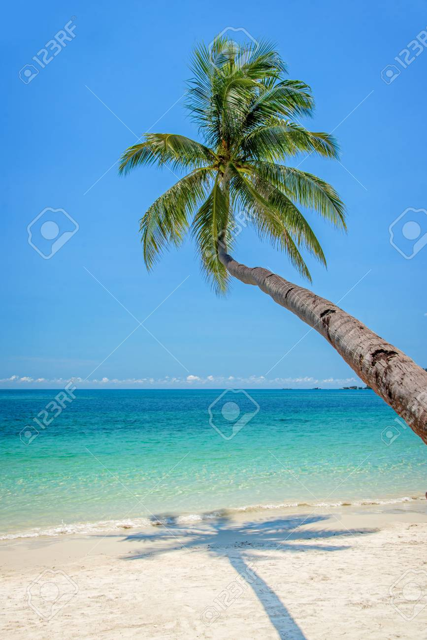 leaning palm tree over a beach with turquoise sea stock photo