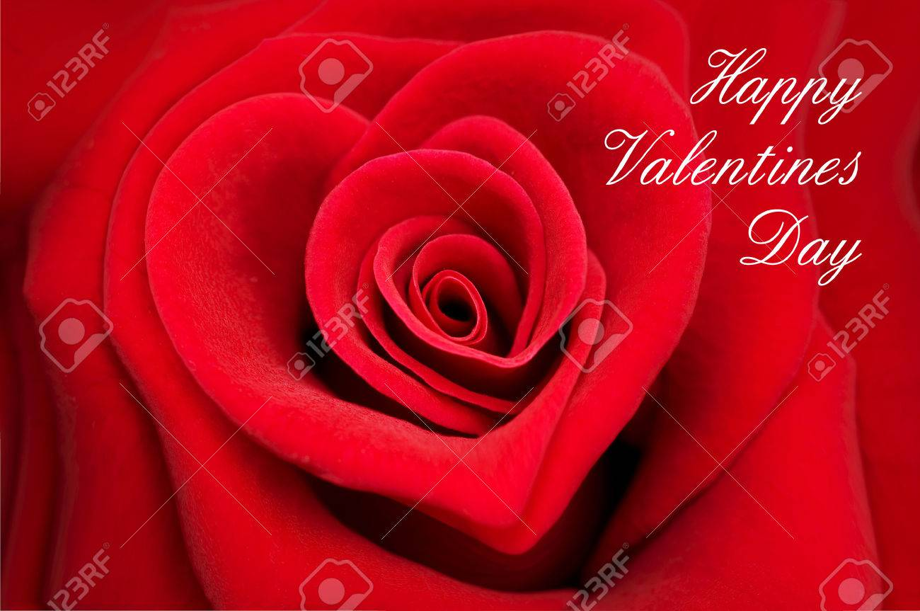 Valentine Greeting Card Red Rose In The Shape Of A Heart Stock