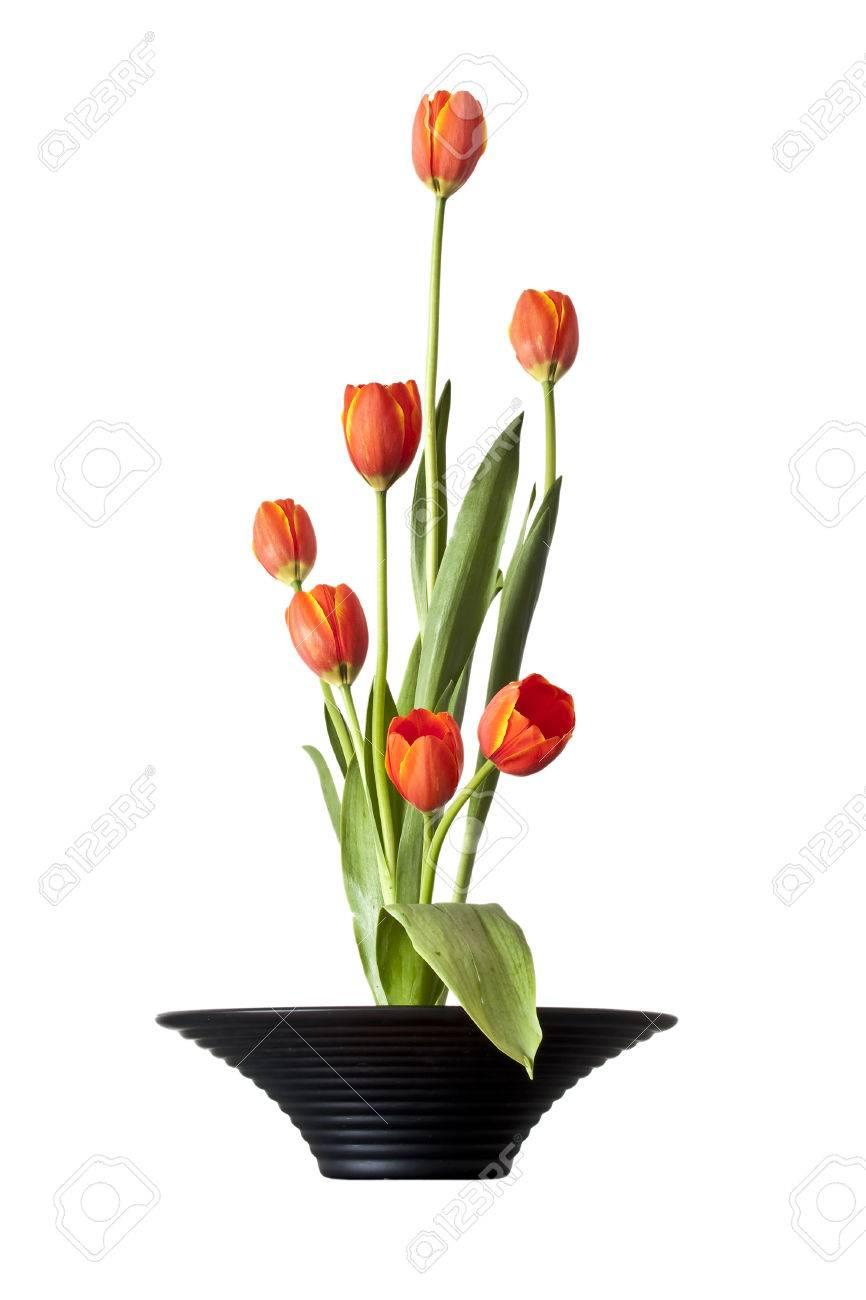 Tulipanes Ikebana El Arreglo Floral Japonés Aislado En El Fondo Blanco