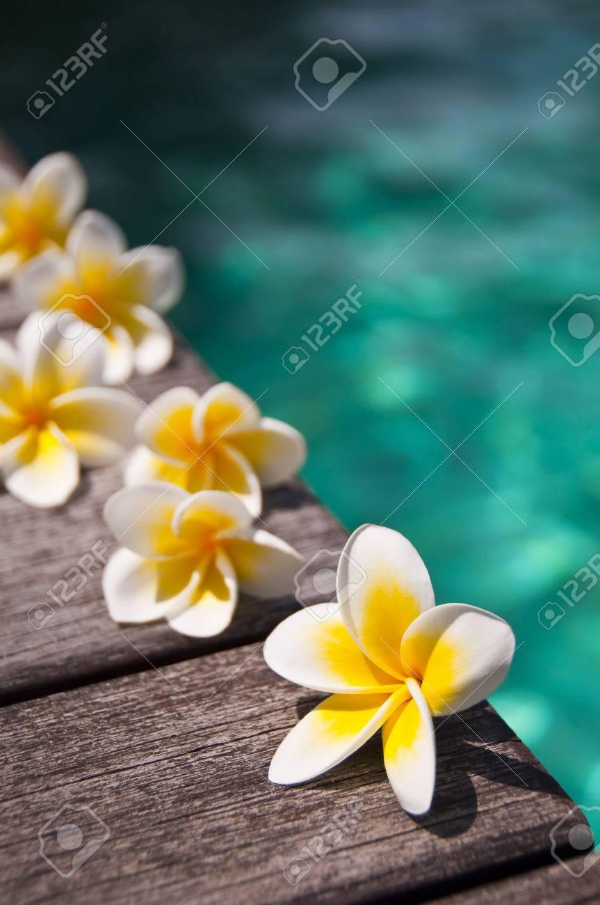 Plumeria flowers on wooden floor blue water background zdjcia plumeria flowers on wooden floor blue water background zdjcie seryjne 54856011 izmirmasajfo