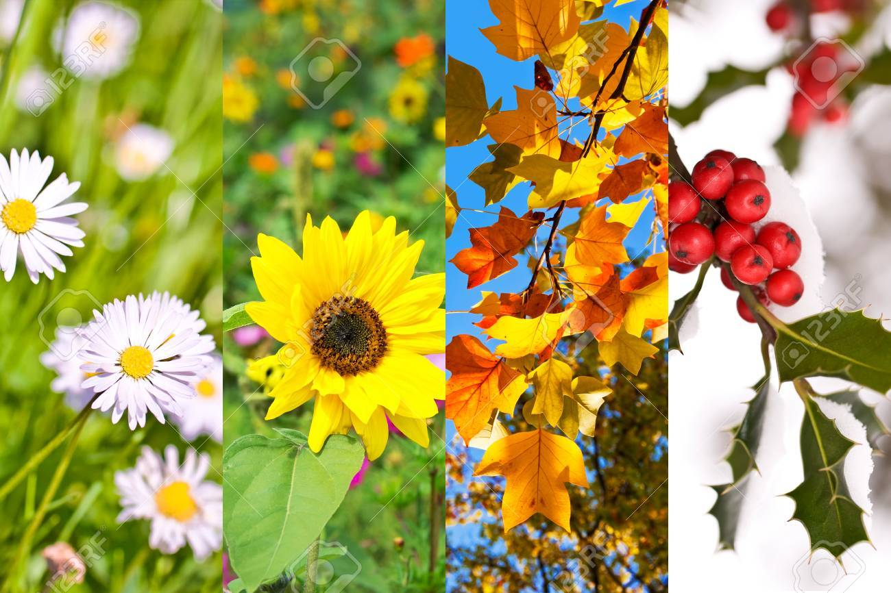 Plants And Flowers In Spring Summer Autumn Winter Photo Collage