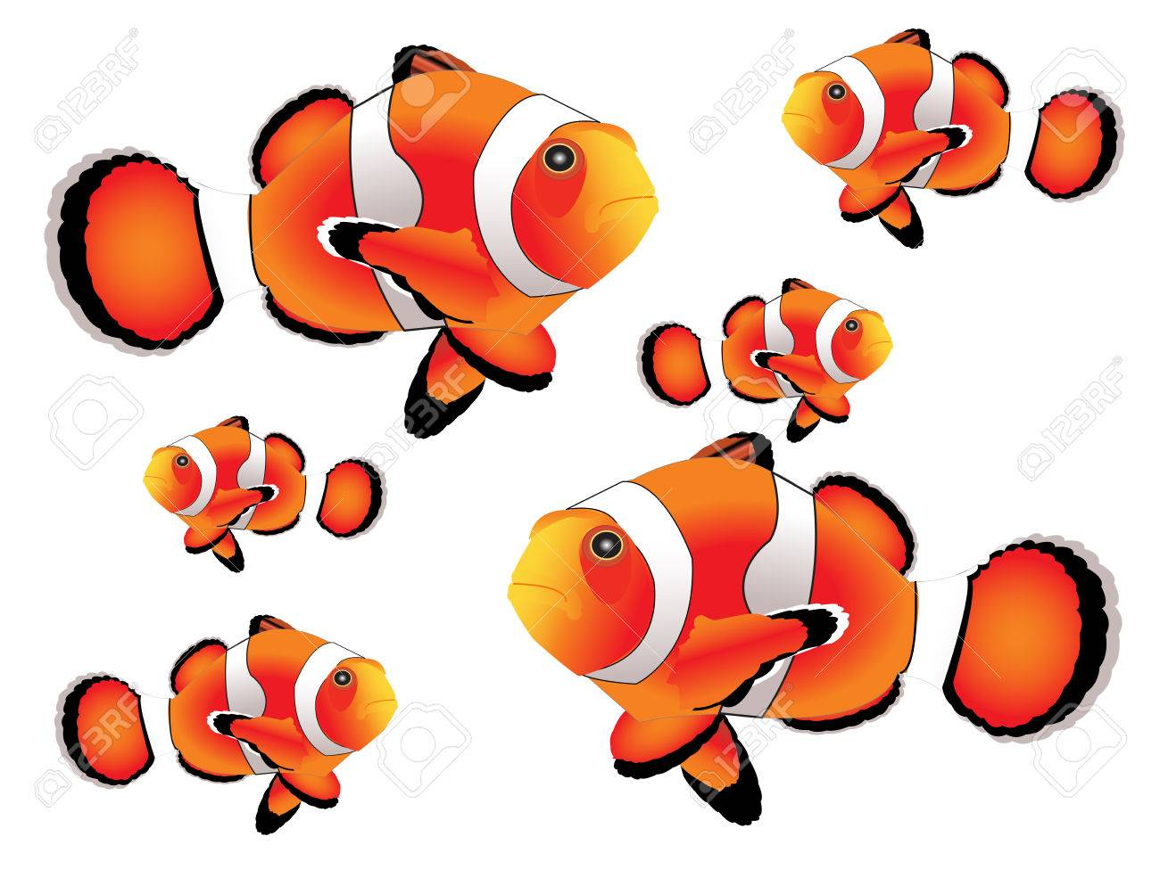 Clownfish With White Background Royalty Free Cliparts, Vectors, And ...