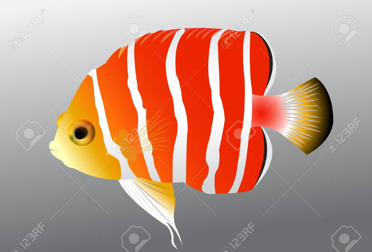 Beautiful Tropical Fish Royalty Free Cliparts, Vectors, And Stock ...