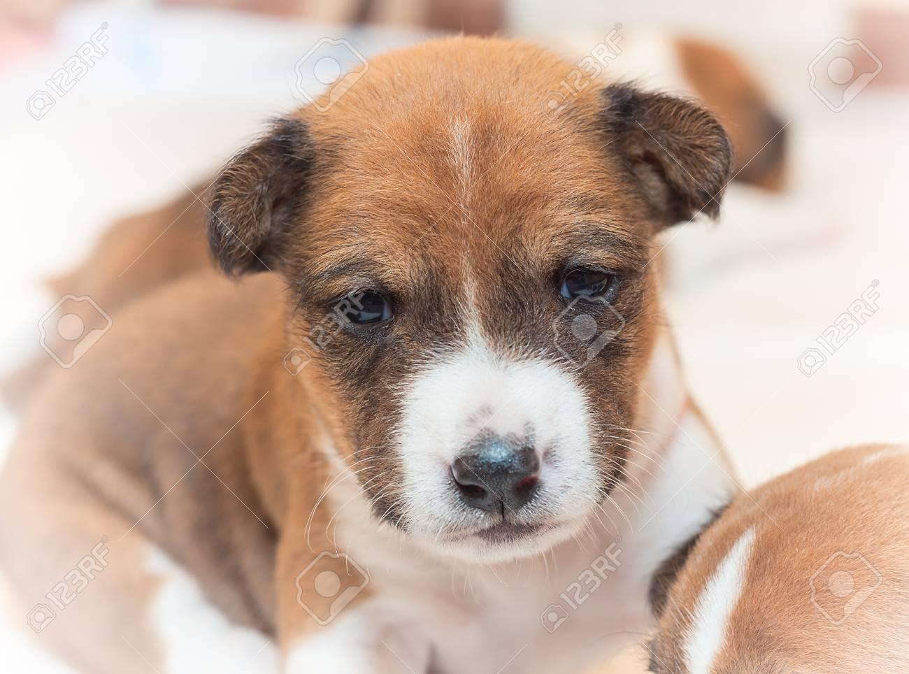 Bezaubernd Schöne Hunderassen Das Beste Von Schöne, Niedliche Welpen Hunde Nicht Bellen Afrikanischen