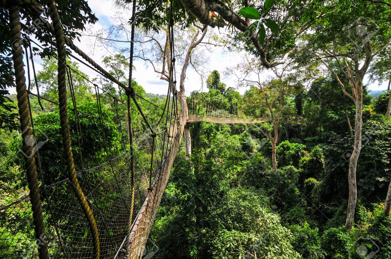 things to do in cape coast, kakum park, canopy walk