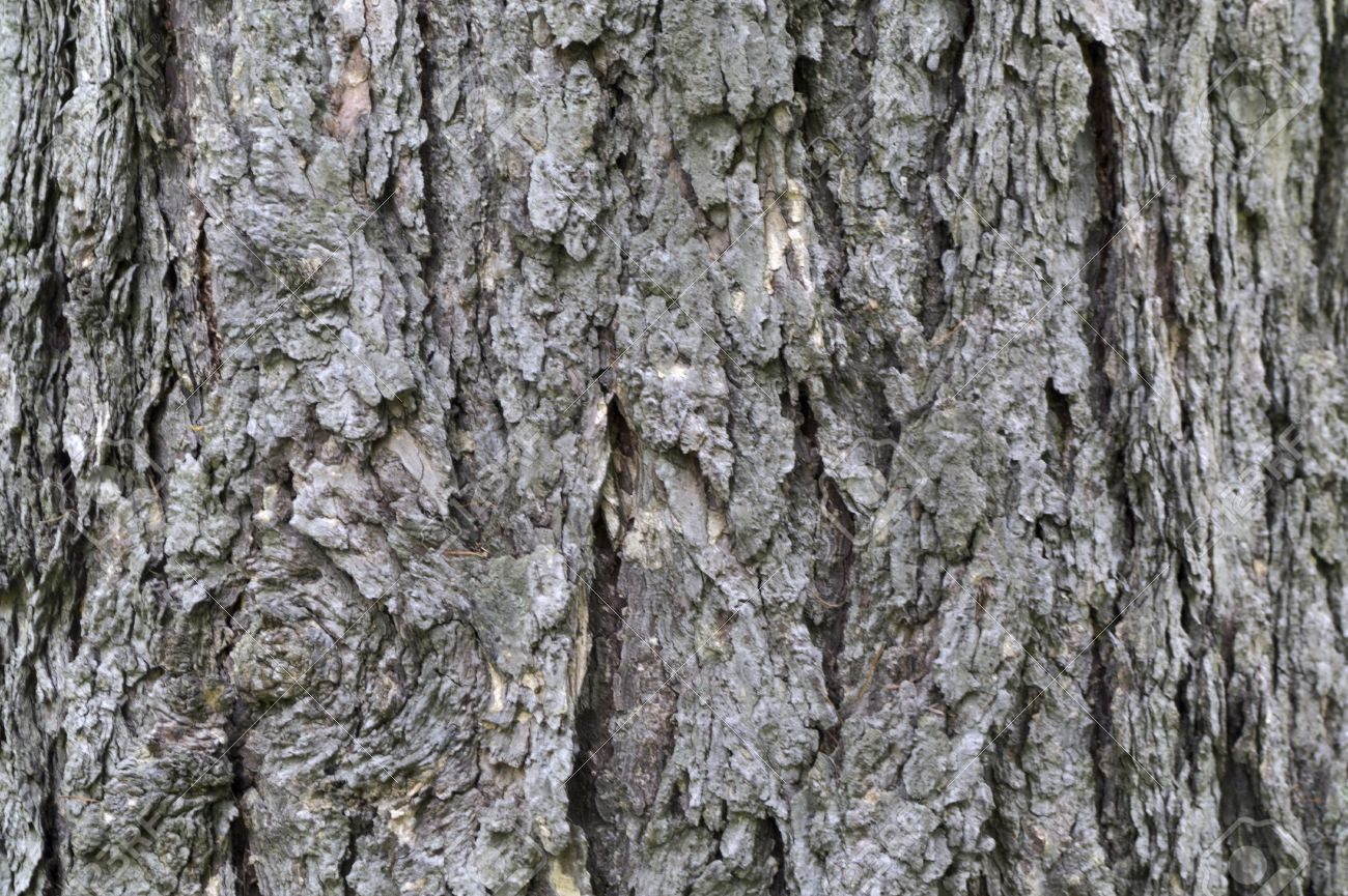 Textural Larch Tree Bark Textural Background Stock Photo Picture And .