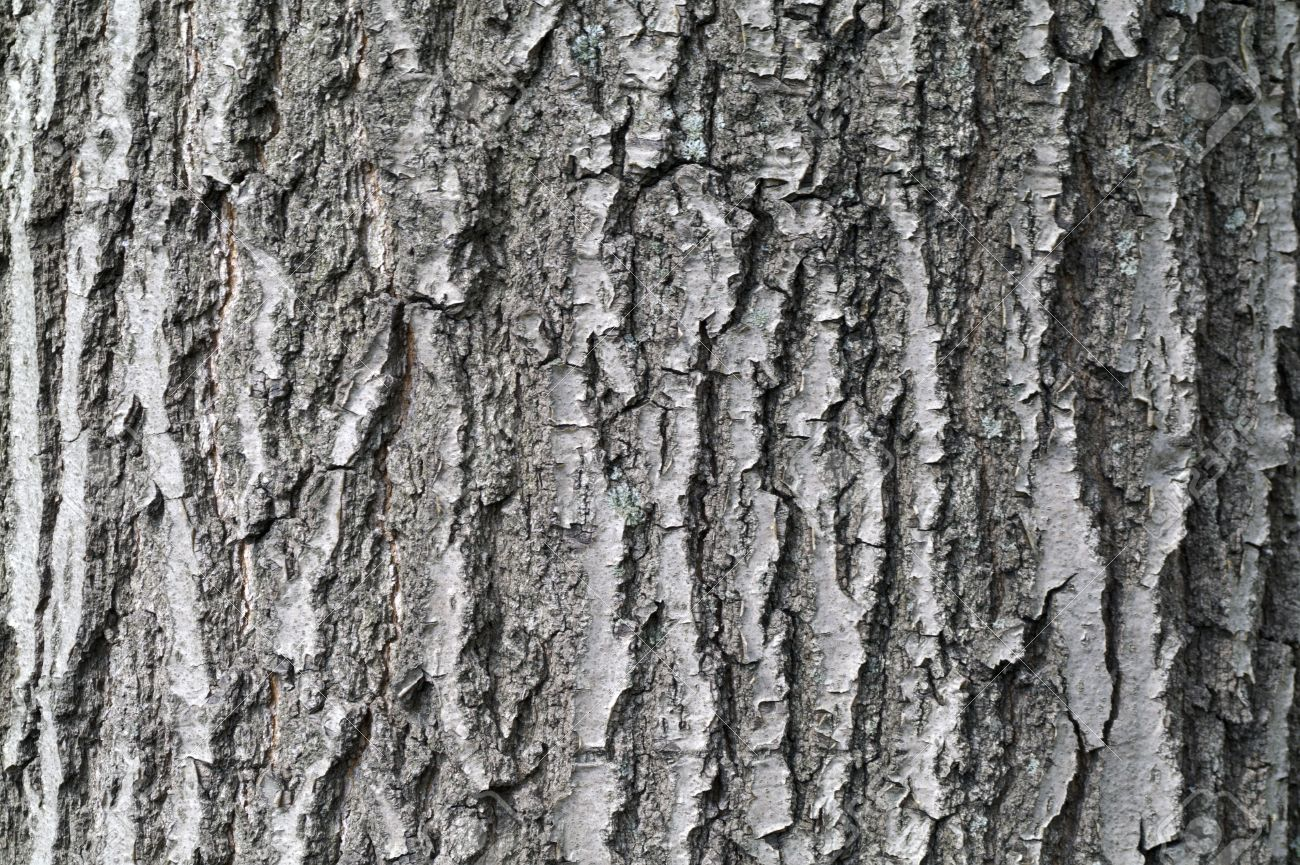 Textural Oak Tree Bark Textural Background Stock Photo Picture And Royalty .