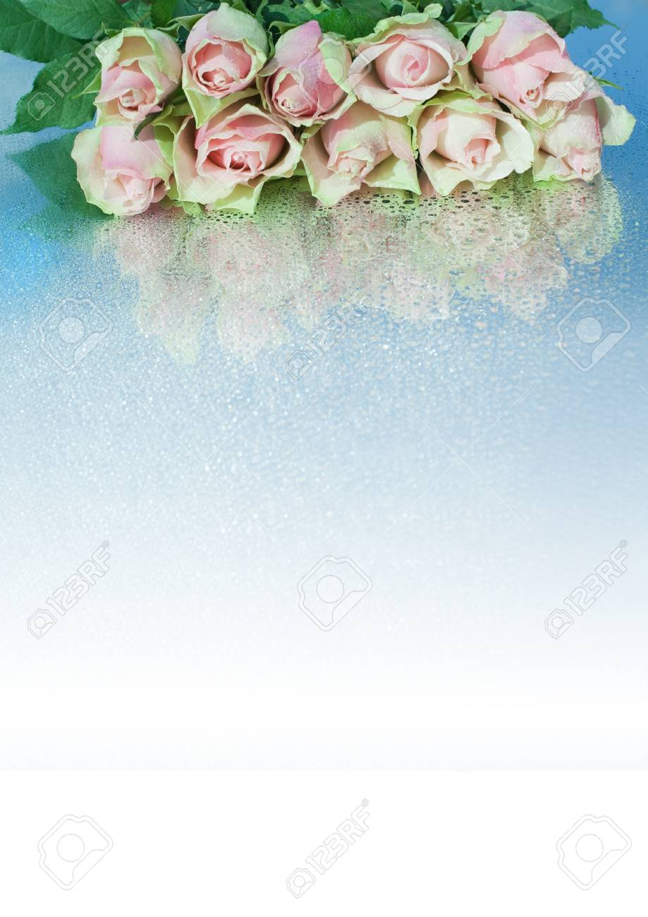 Roses with drops making a border.  Gradient Stock Photo - 11618262