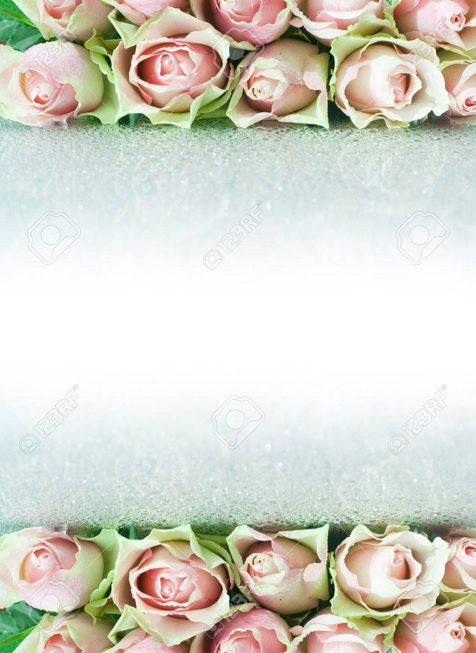 Roses with drops making a border. Reflection Stock Photo - 11618261