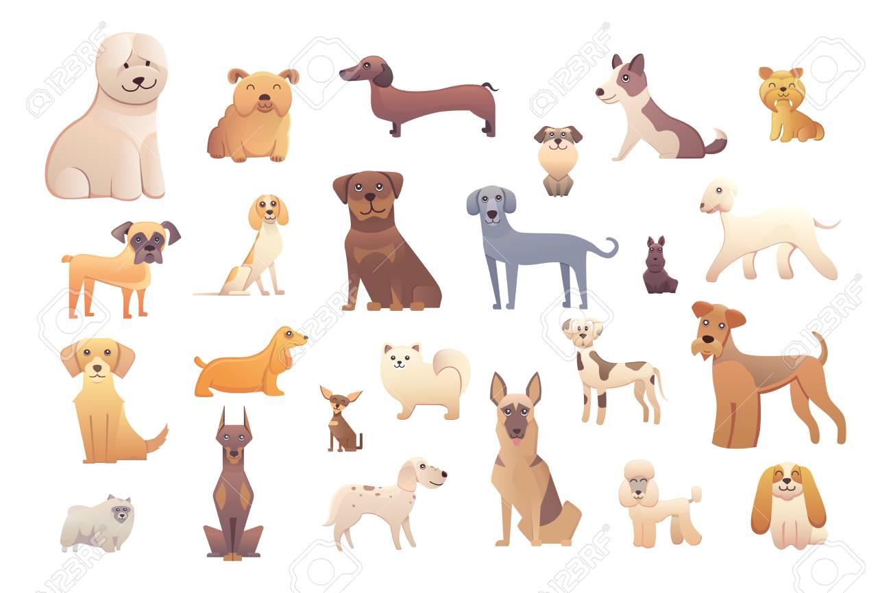 dog training courses