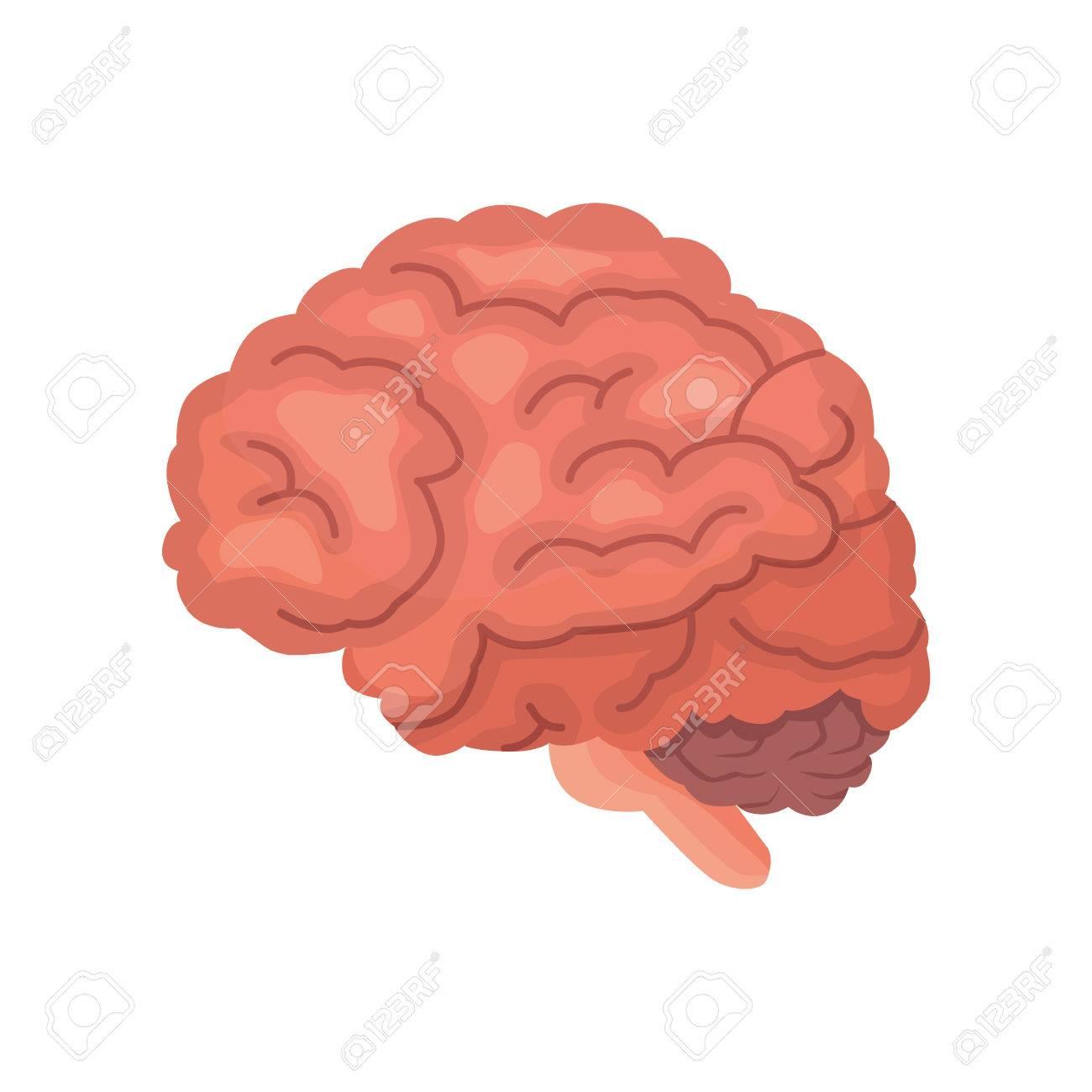 Icono De Vector De Dibujos Animados Anatomía Del Cerebro Humano ...