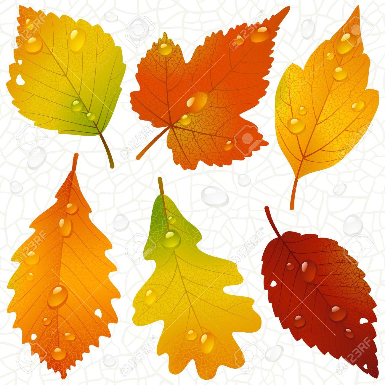 осенние листья картинки без фона