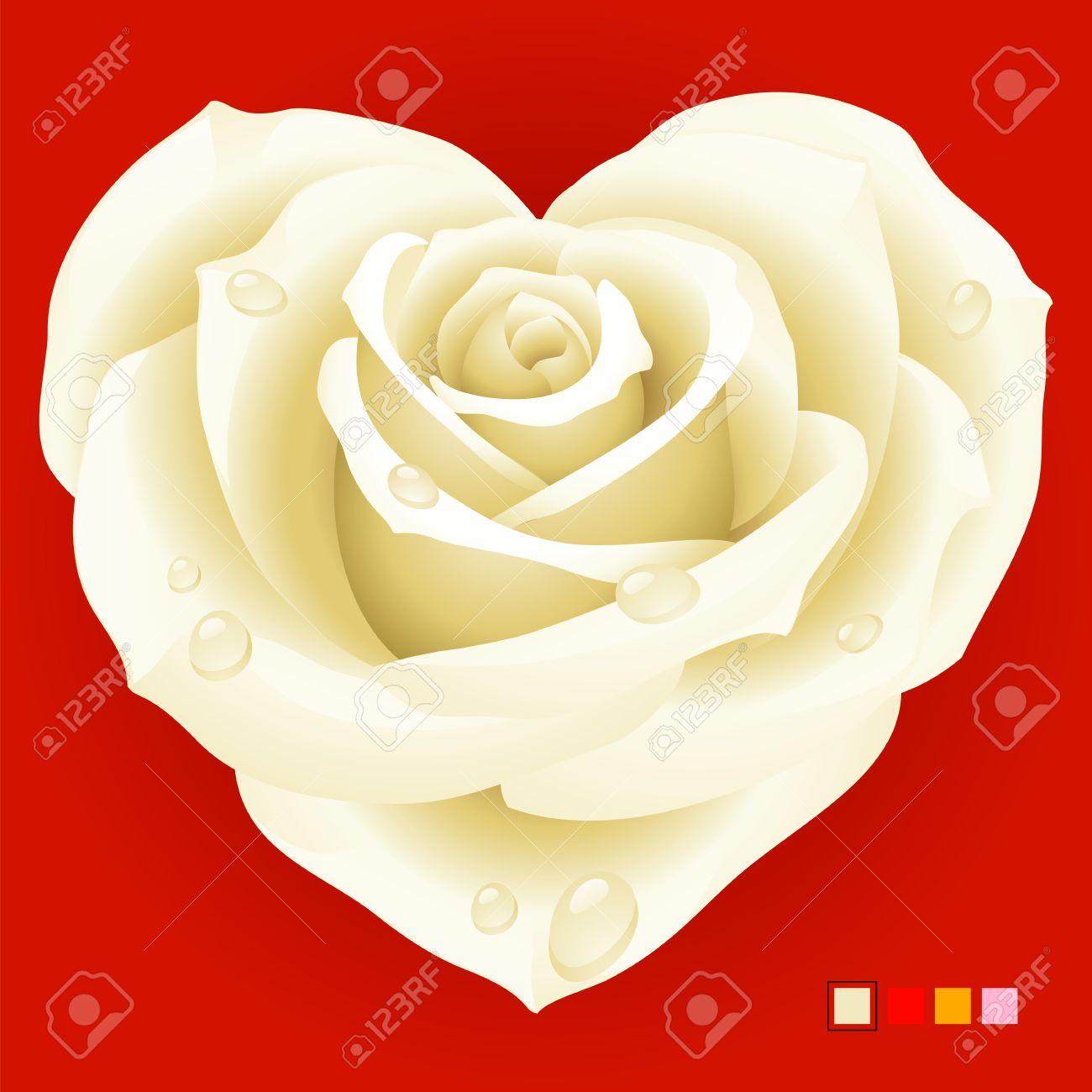 Rosa Blanca En Forma De Corazón Ilustraciones Vectoriales Clip Art