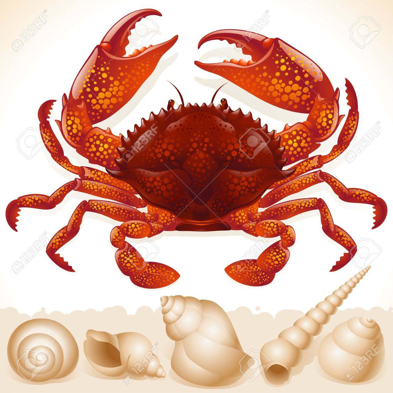 Red crab and few seashells Stock Vector - 12477237