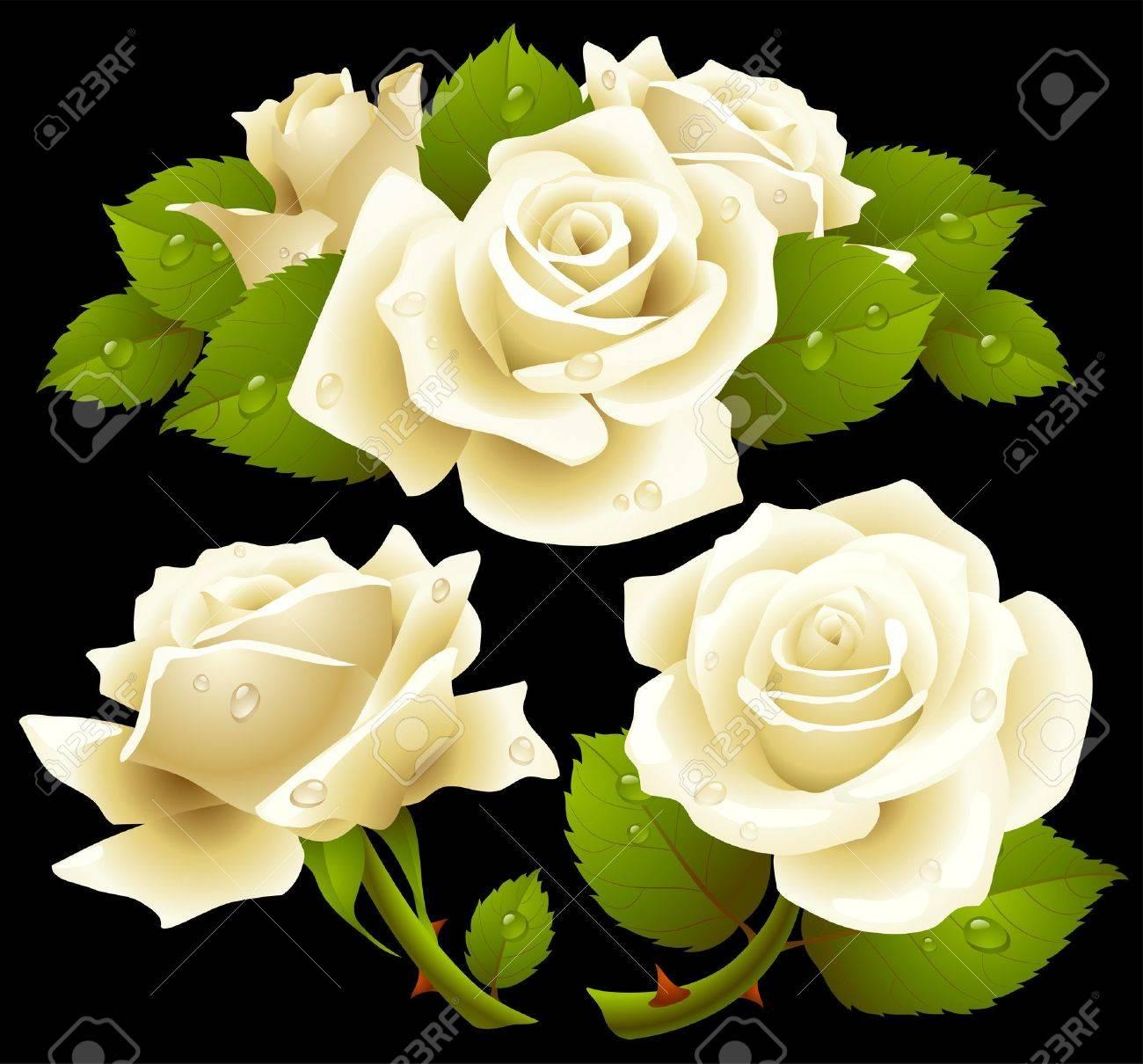 70c218fa1730 White roses set Stock Vector - 12796559