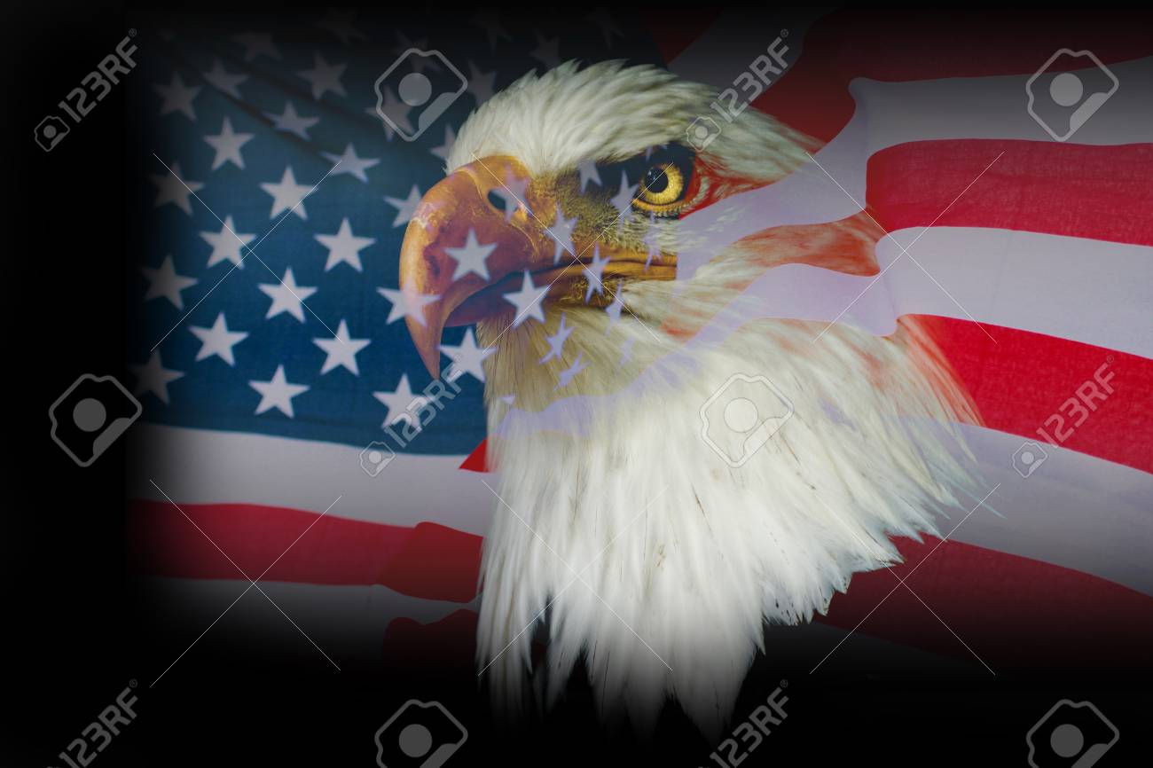 Wallpaper American Eagle With Usa Flag Stock Photo Picture And