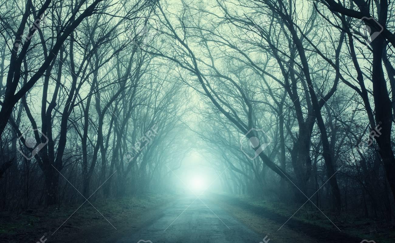 El Camino Que Pasa A Traves Del Bosque Misterioso Miedo Con Luz Verde En La Niebla En Otono Arboles Magicos Naturaleza Paisaje Brumoso Fotos Retratos Imagenes Y Fotografia De Archivo Libres De
