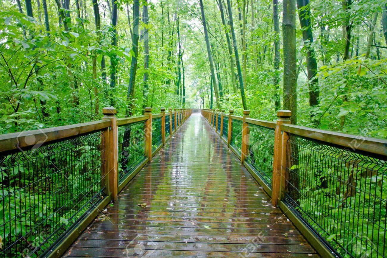 Camino Por El Bosque Lluvioso Templado Atlantico Quebec Ville Laurainne Fotos Retratos Imagenes Y Fotografia De Archivo Libres De Derecho Image 12463219
