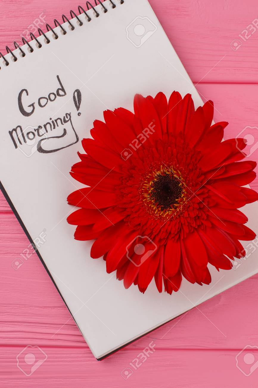 Good Morning Wish For Girl Notepad And Red Daisy Flower Pink