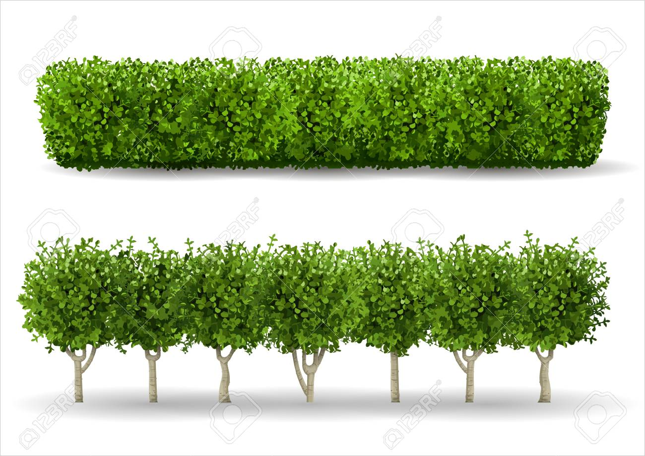 Bush in the form of a green hedge. Ornamental plant. The garden or the Park. Set of fences. - 100311087