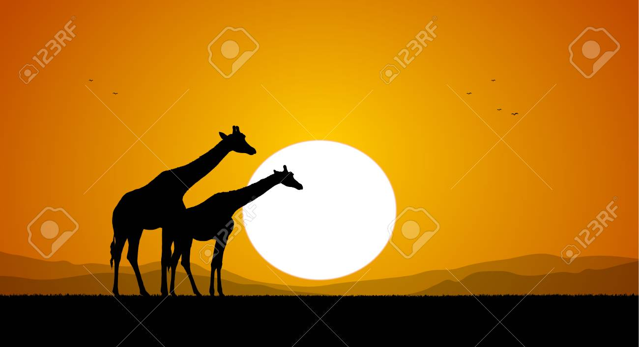 Two Giraffe against the setting sun and hills. Silhouette - 94313476