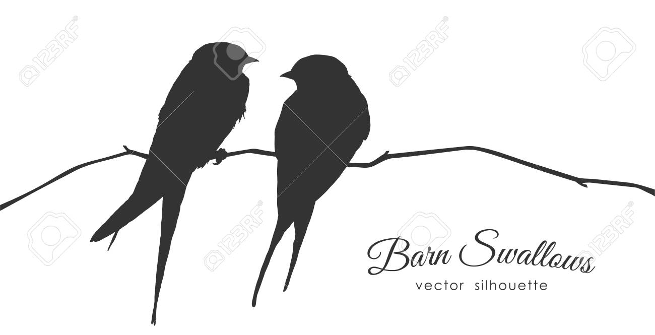 Vector illustration: Isolated Silhouette of two Barn Swallows sitting on a dry branch on white background. - 94716083