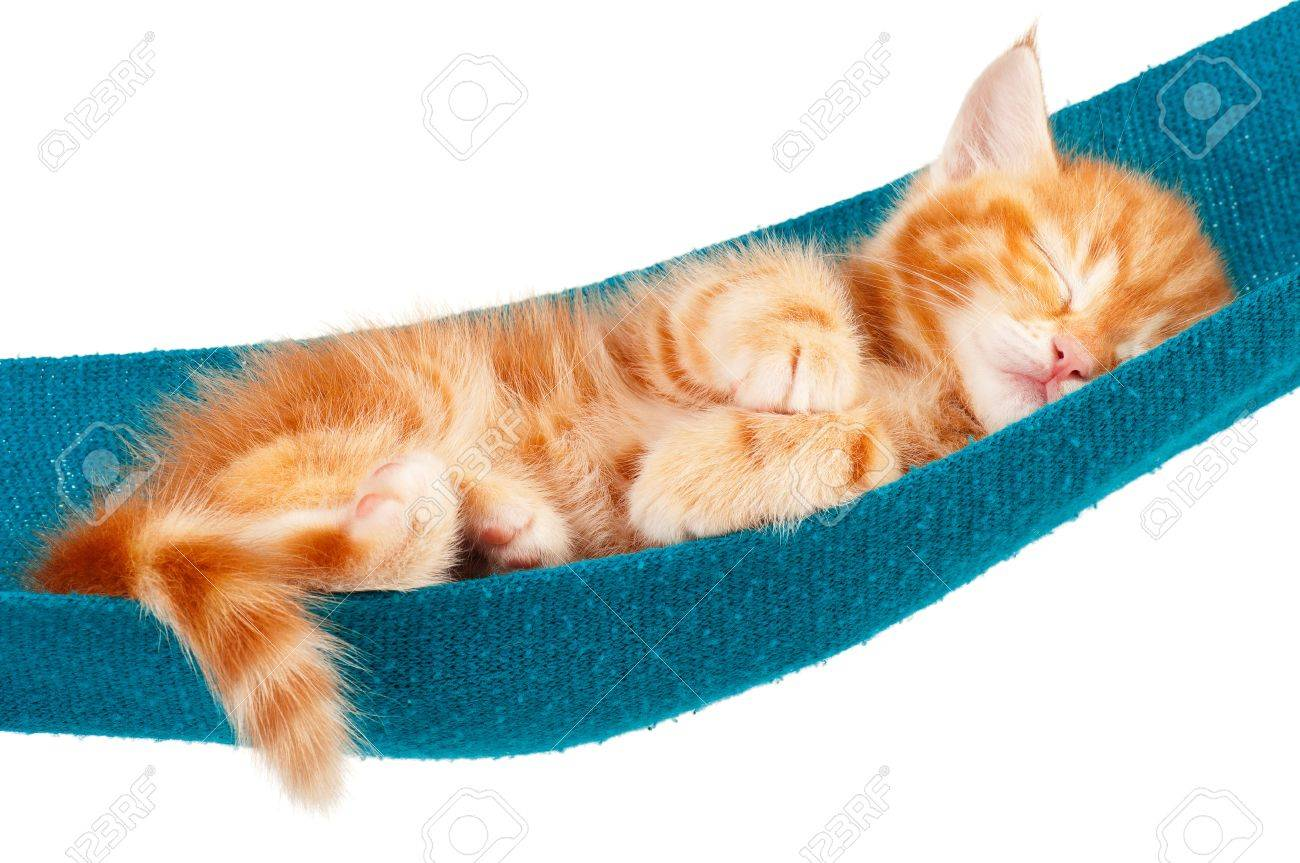 Cute little red kitten in a hammock  isolated on white background Stock Photo - 15823323