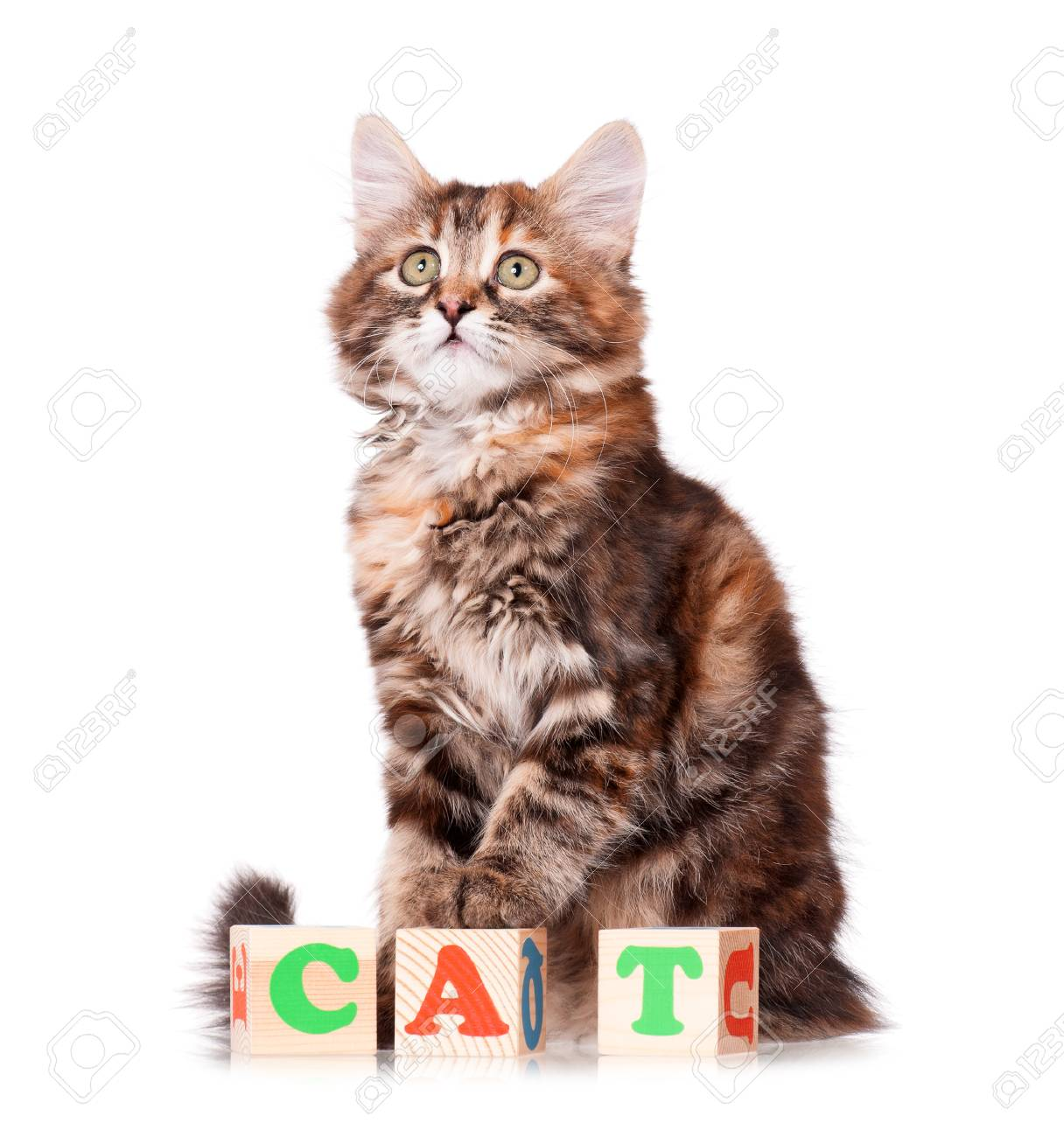 Kitten with wooden toy cubes with letters, isolated on white background Stock Photo - 23724498