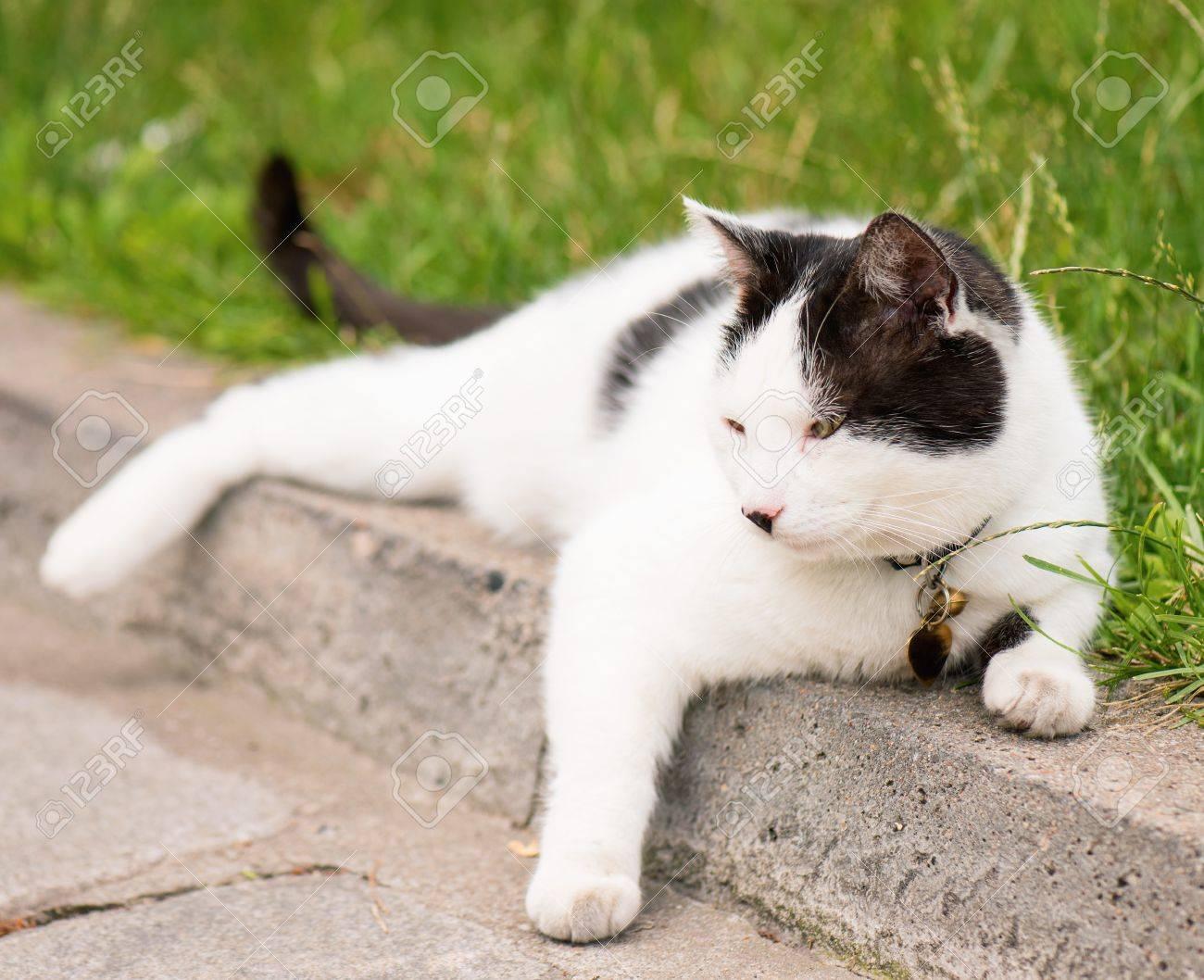noir adulte chatte femme Fellation pornhub
