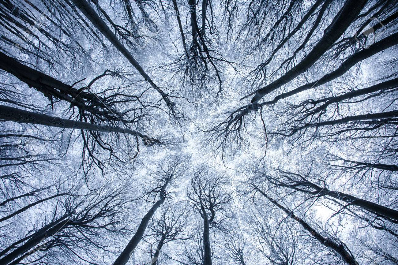 artsy wide angle tree pattern stock photo picture and royalty free