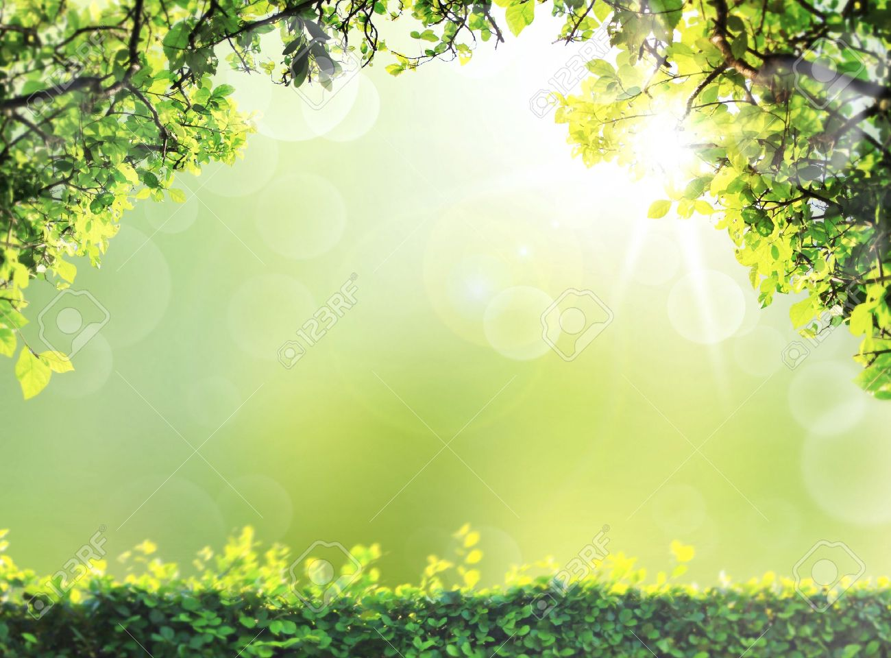 Natural Green Spring Or Summer Season Abstract Nature Background