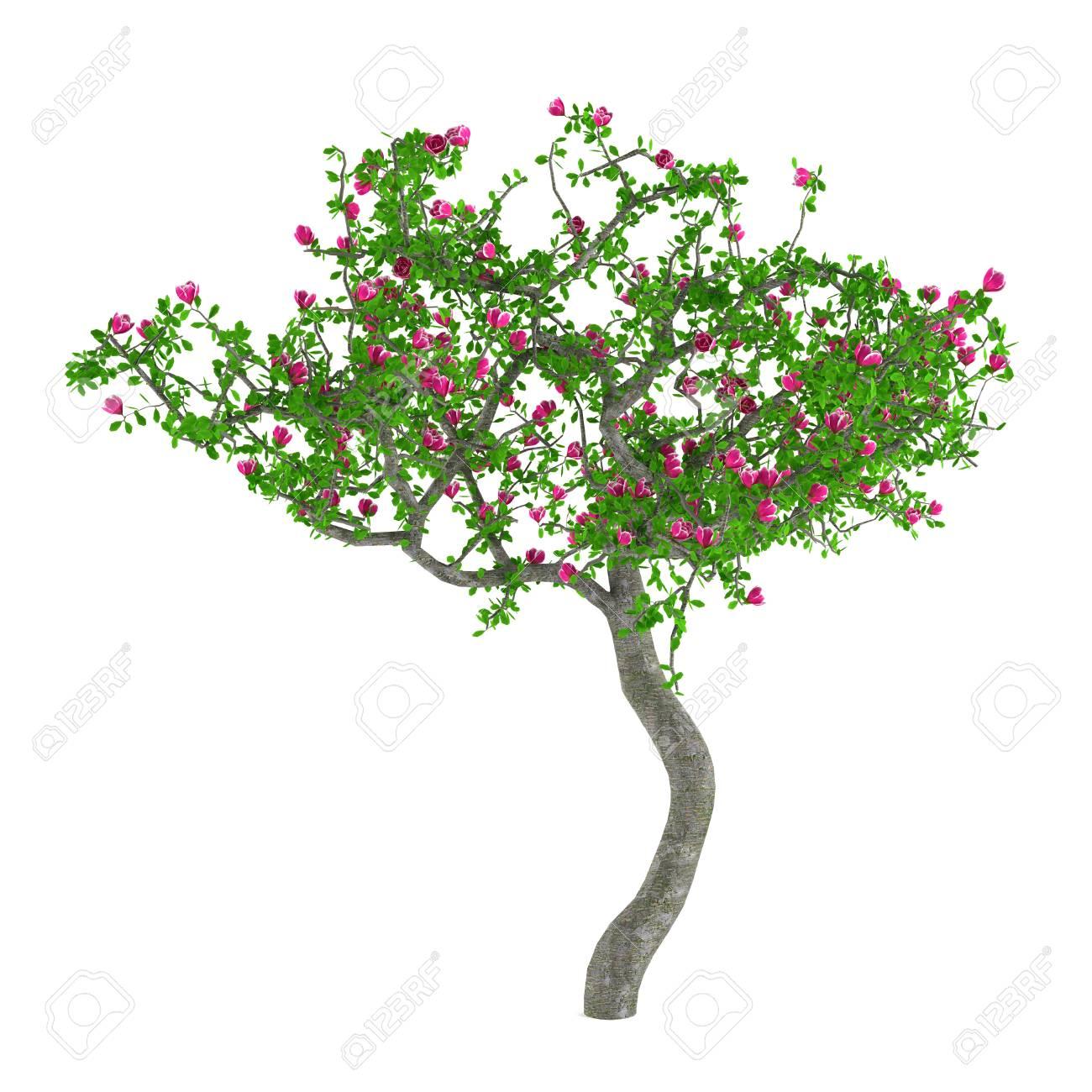 arbres à fleurs. arbre décoratif avec des fleurs roses banque d