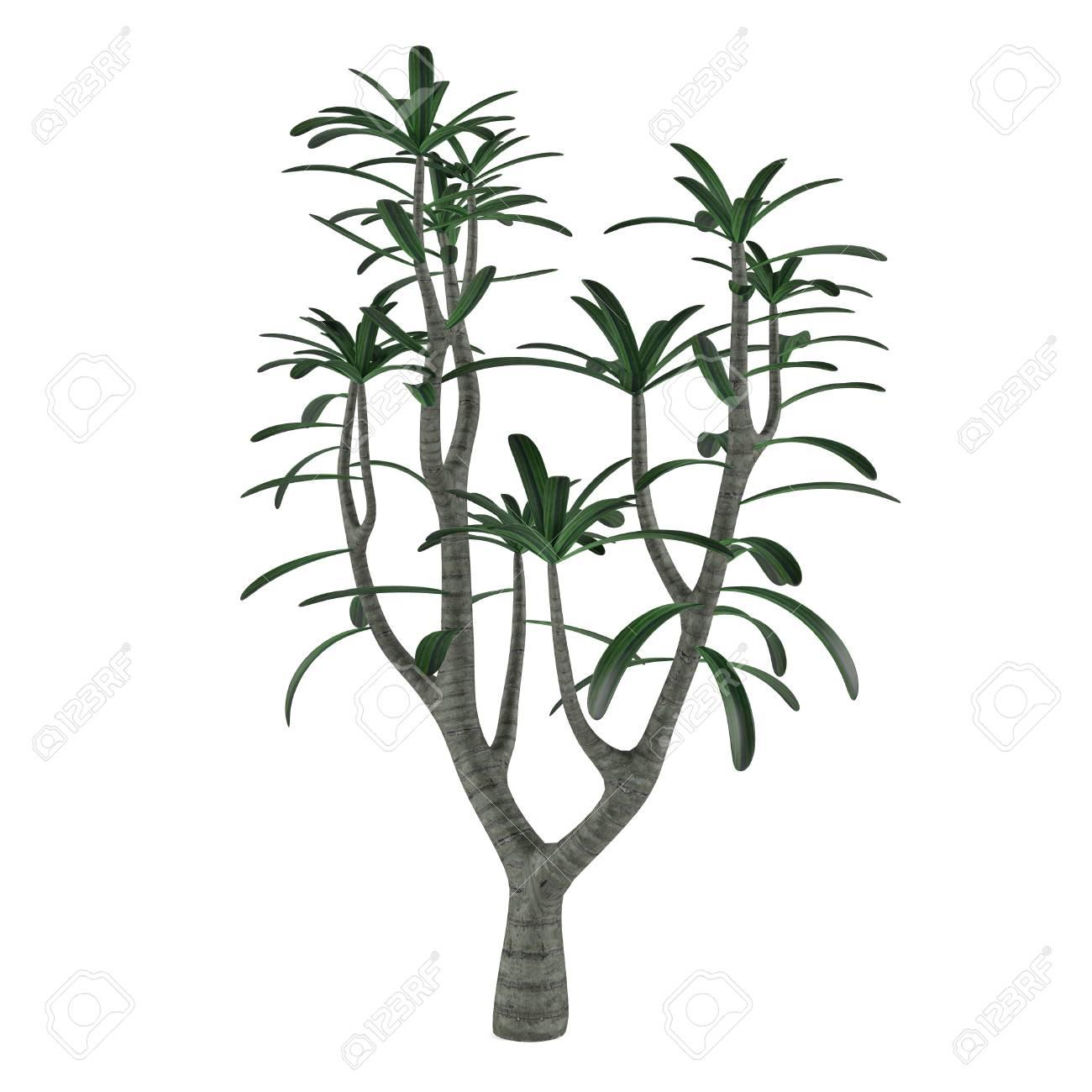 arbre décoratif à l'arrière-plan blanc banque d'images et photos