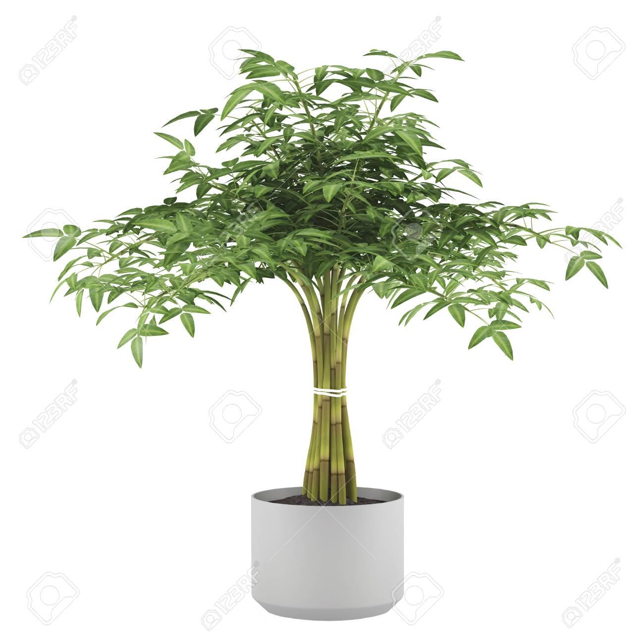 arbre décoratif de plantes dans le pot de balle banque d'images et