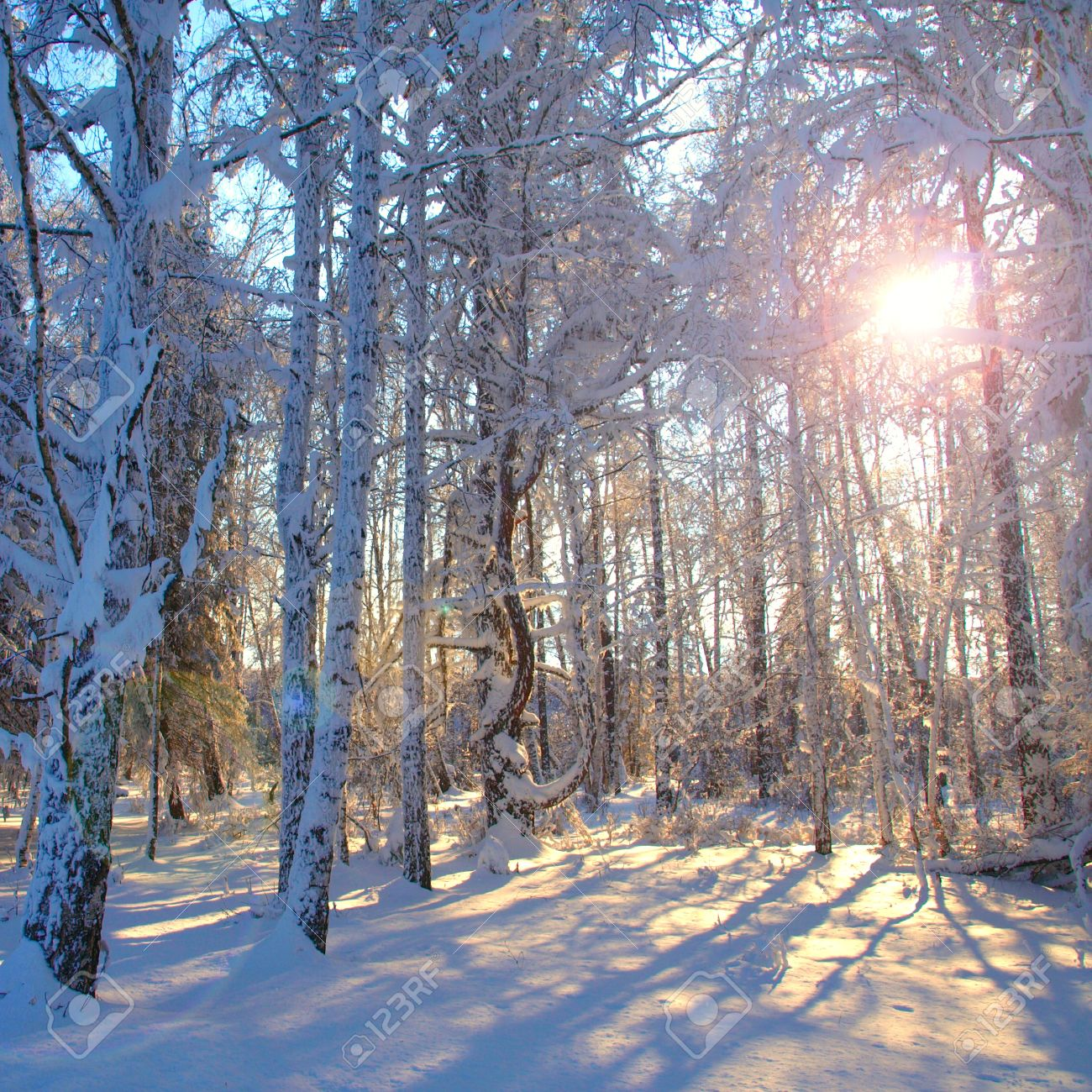 Morning sun in the winter forest. Stock Photo - 11474476