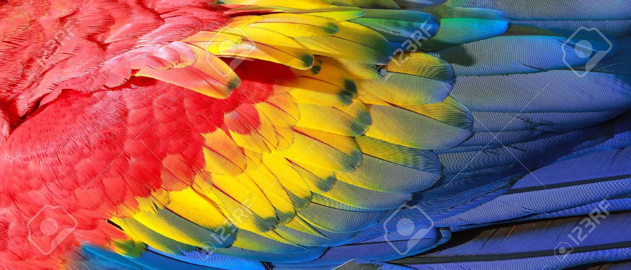 Parrot Feathers Red Yellow