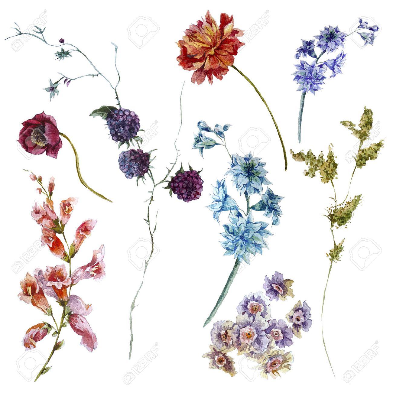 Set De Fleurs A L Aquarelle Brins De Feuilles Separement Fleur