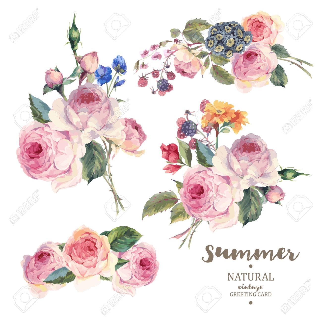 Set of vintage floral vector bouquet of English roses and wildflowers, botanical natural rose Illustration on white. Summer floral roses greeting card - 59797190