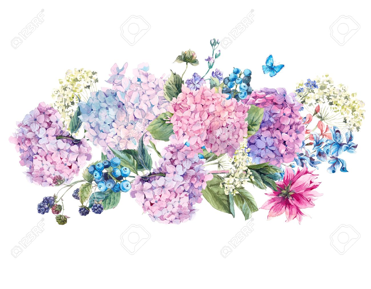 Summer Watercolor Vintage Floral bouquet with Blooming Hydrangea and garden flowers, Watercolor botanical natural hydrangea Illustration isolated on white - 59810384