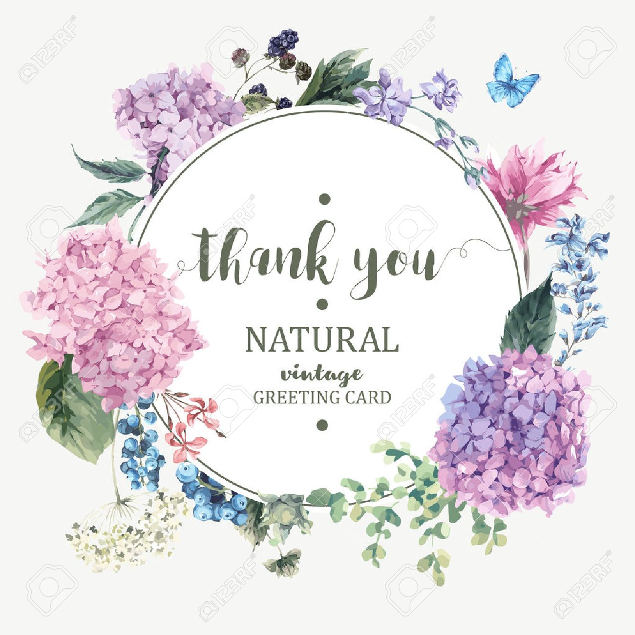 Summer Vintage Floral Greeting Card with Blooming Hydrangea and garden flowers, Thank you botanical natural hydrangea Illustration on white in watercolor style. - 59810392