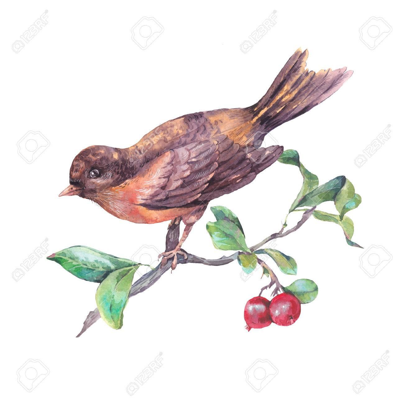 Vintage Dessin A La Main Carte Aquarelle Oiseau Sur Une Branche