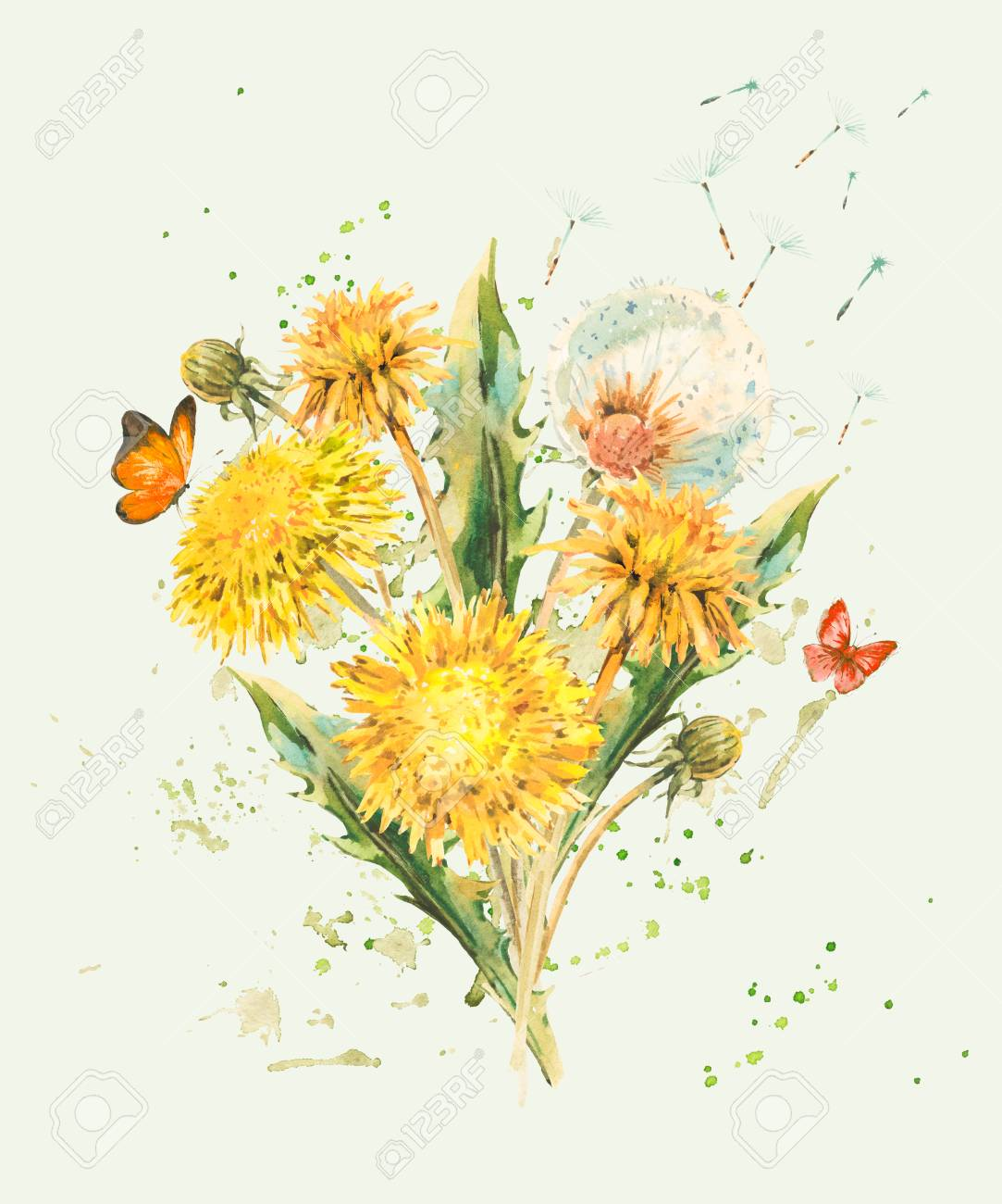 Watercolor Spring Flowers Of Yellow Dandelions Stock Photo Picture