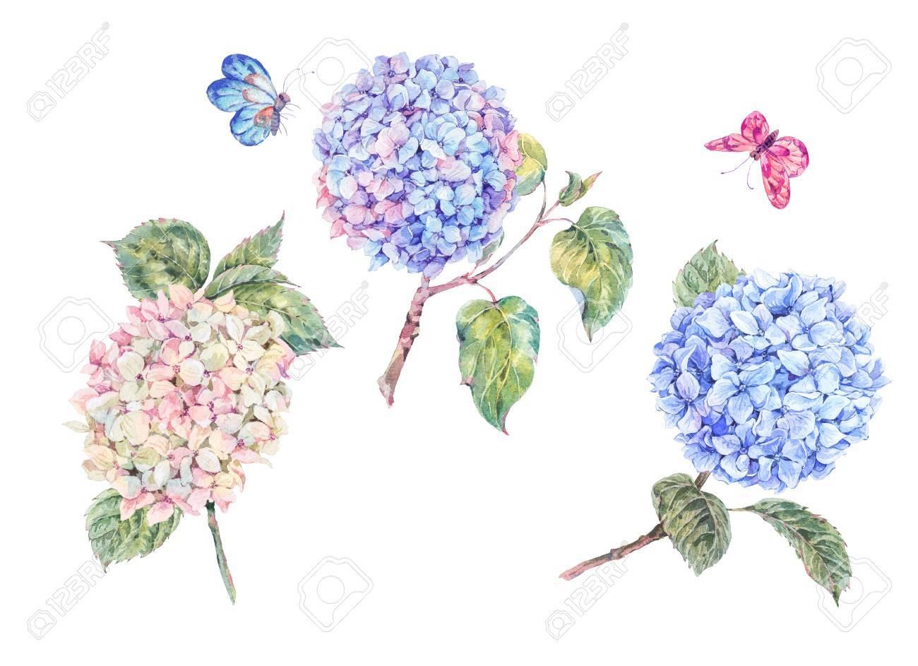 Ensemble D Hortensias Et De Papillons En Fleurs D Aquarelle