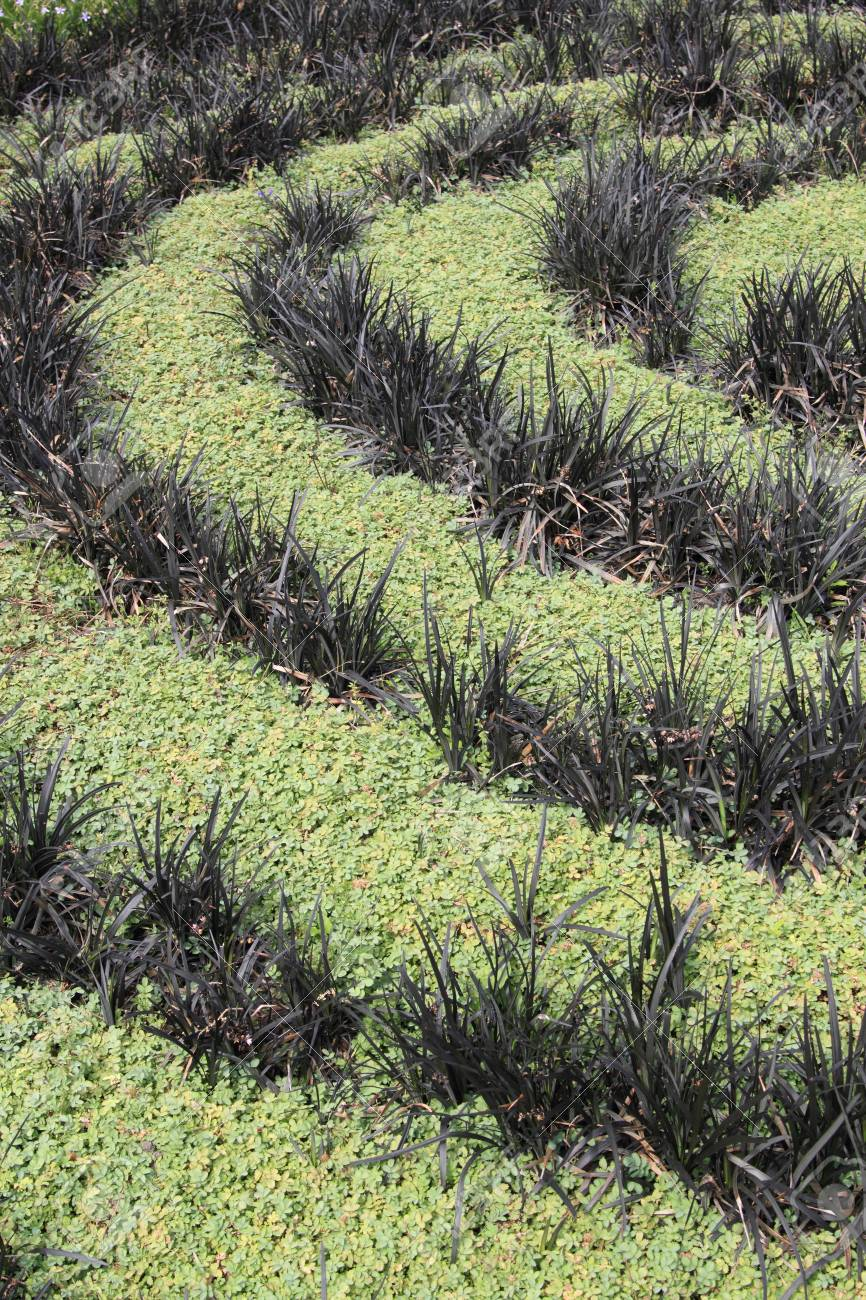Spiral Of Dark And Bright Green Plants In A Flower Bed Stock Photo Picture And Royalty Free Image Image 26039968