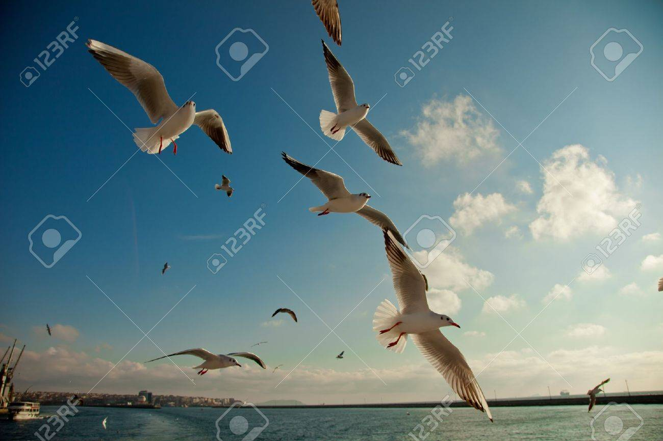 seagull following passenger ship - 11689127