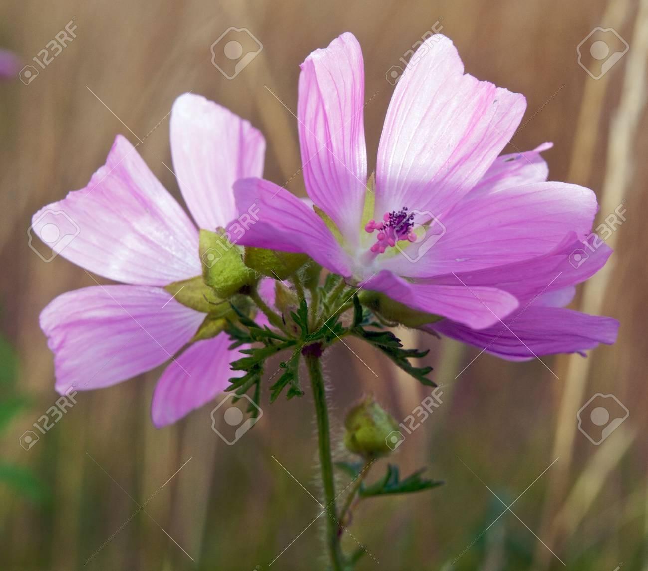 Wild Flowers Stock Photo - 5431697