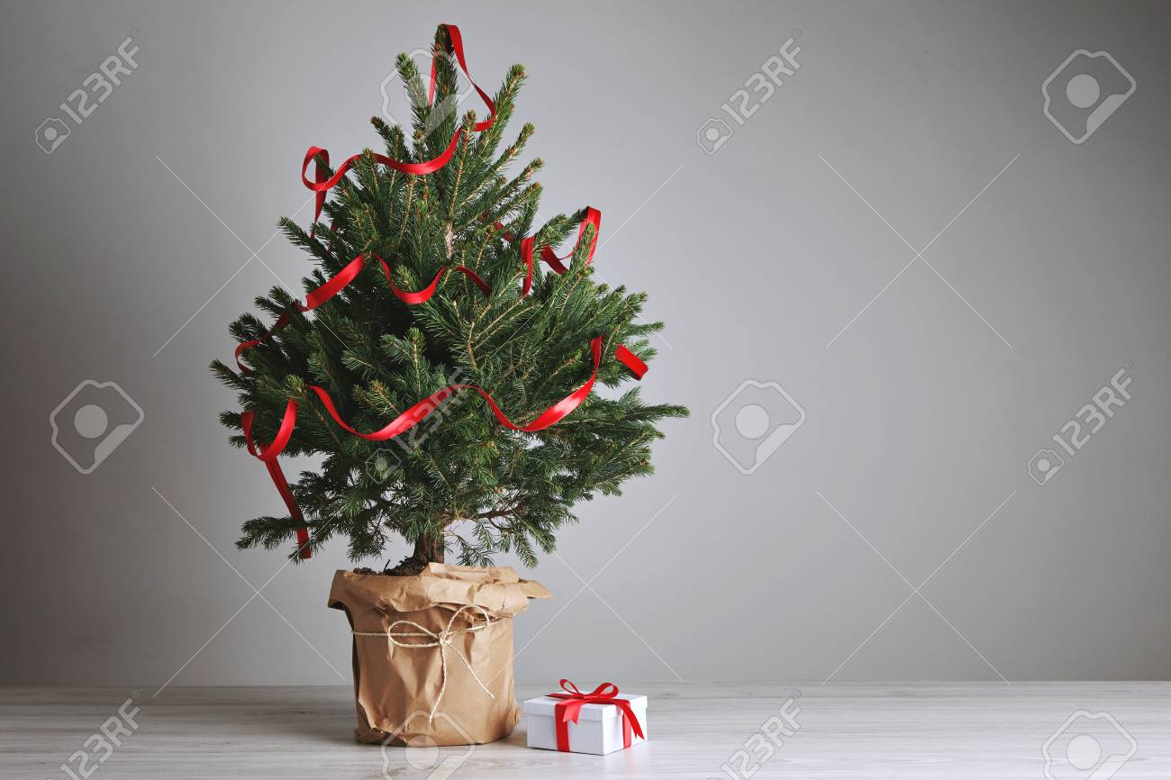 Fresh Christmas Trees.Tabletop Green And Fresh Christmas Tree With Ribbon Decoration