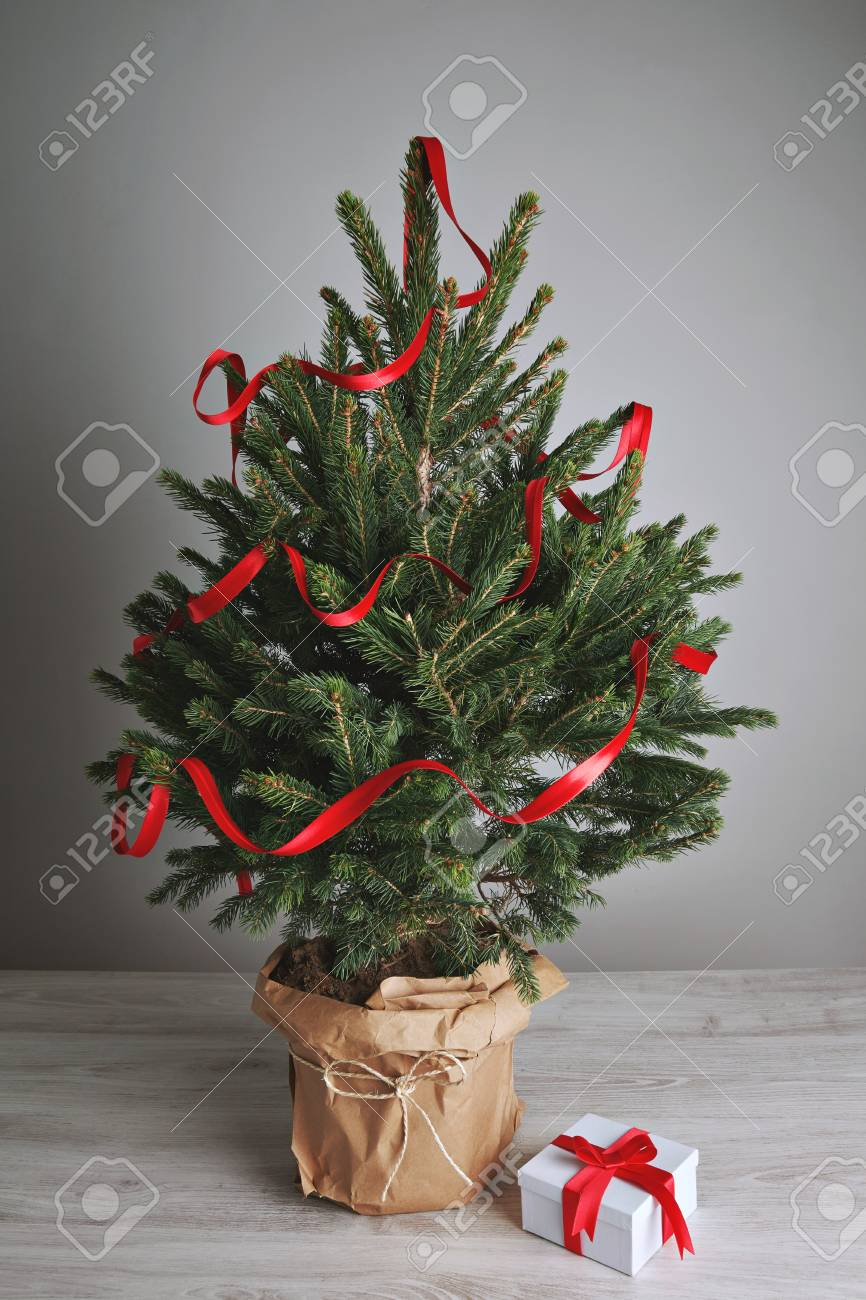 Lush And Gorgeous Little Christmas Tree In A Pot Wrapped In Brown